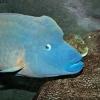 Нови забележителности: Огромен аквариум в Йерусалим