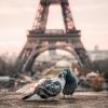 Айфеловата кула в 11 факта, които вероятно не знаеш