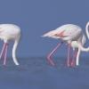 Зима в Кипър? Открий езерата, пълни с фламинго!