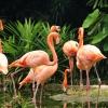 Луксозен курорт на Бахамите си търси мениджър фламинго