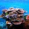 Големият бариерен риф - шедьовърът на Австралия