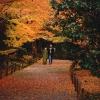 Момиджигари – японската традиция да се дивиш на есента