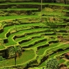 Тегалаланг – живописните оризови тераси на остров Бали