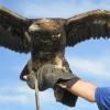 Монголия или какво е да си ловец с орел