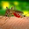 Вирус Зика - къде го има, симптоми и полезна информация