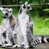 Остров Мадагаскар - един друг свят (ВИДЕО)