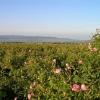 Долината на розите - Карловска котловина (ВИДЕО)
