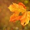 7 кулинарни празника в България, които да посетите тази есен