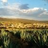 Как изглежда градът, от който идва текилата