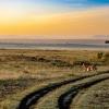Кения: сафари и плаж на един чартър разстояние