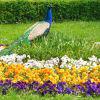 Зоологическата и ботаническата градина - Будапеща