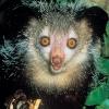 Най-странните животни по света